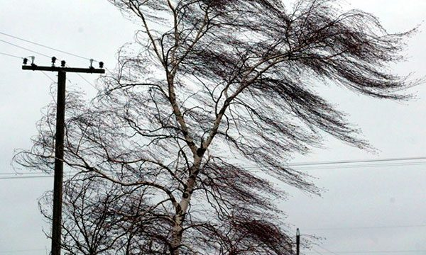 Защита участка от ветра