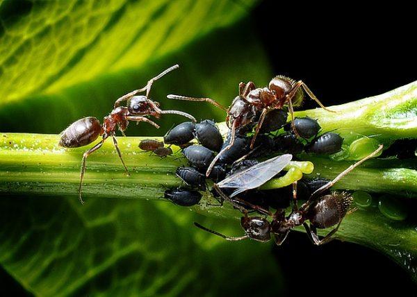 ants-1271768_640