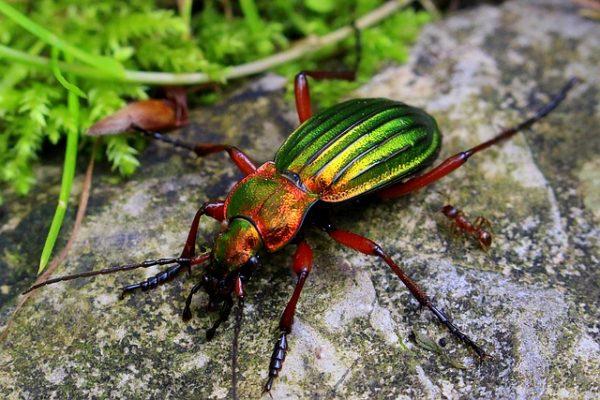 beetle-1432943_640