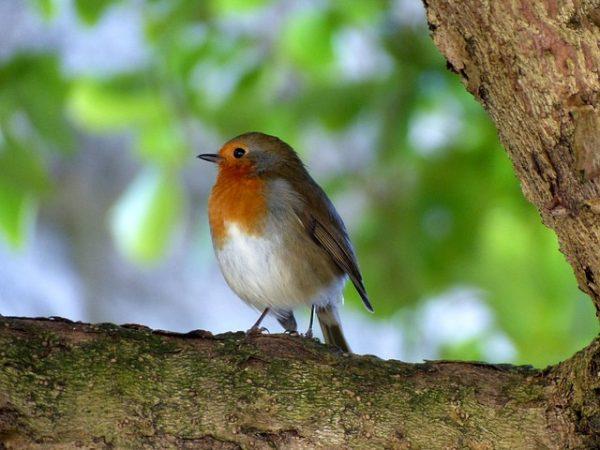 bird-2057573_640