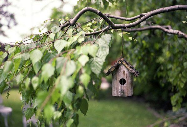 bird-feeder-2344414_640