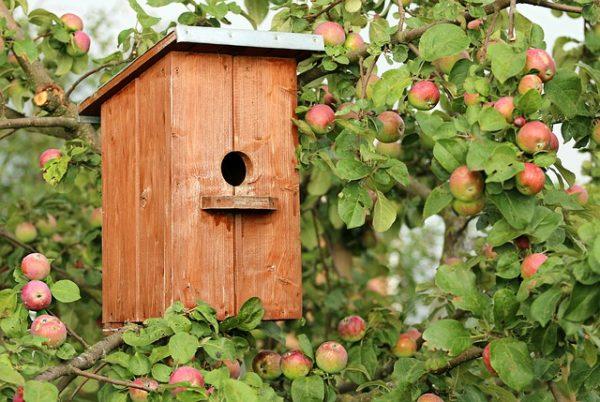 birdhouse-1537806_640