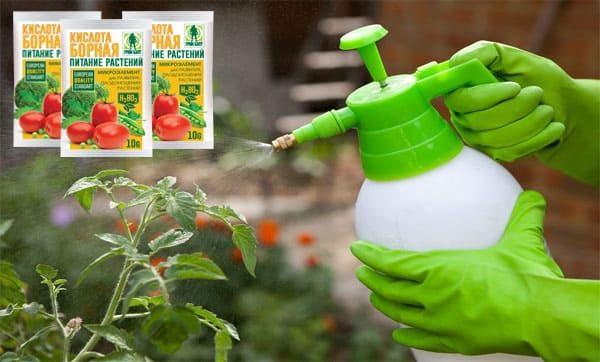 Открытие томатов борной кислотой