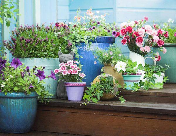 Цветы для вазонов