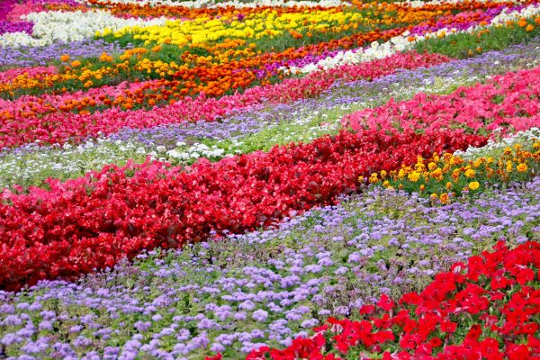 flowers-1029475_1920