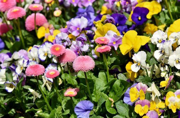 flowers-3318692_640