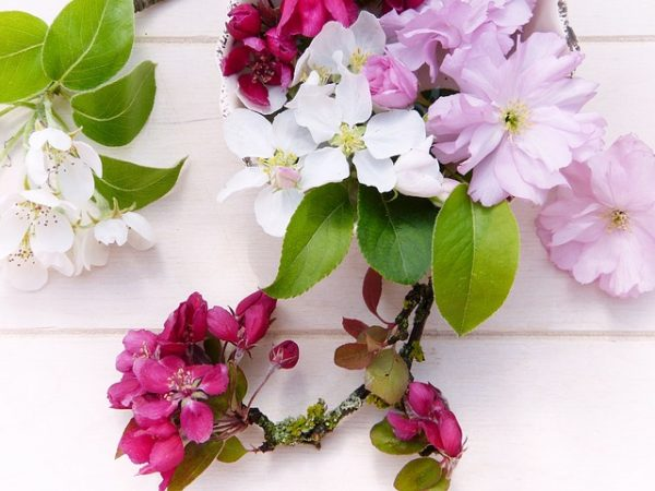 flowers-3351869_640