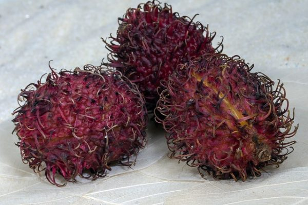 fruits-1529315_640
