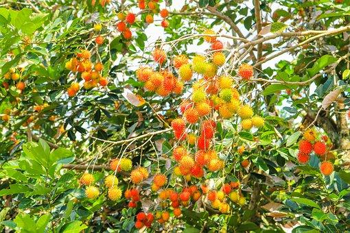 fruits-2644692__340