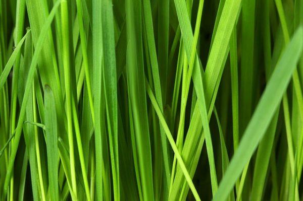 grass-16044_640