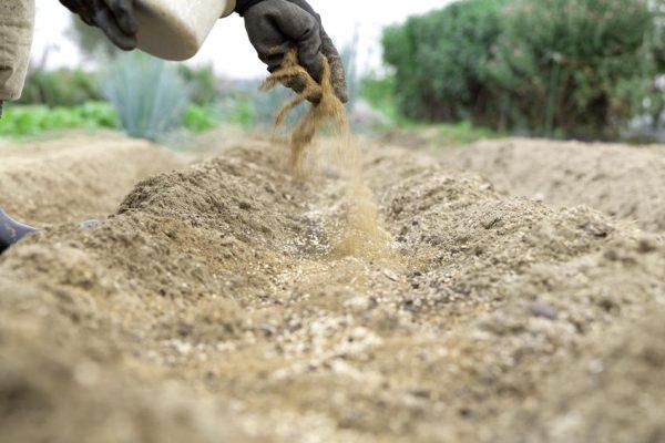 Применение костной муки в садоводстве