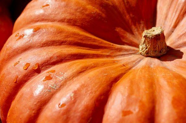 pumpkin-2736964_640