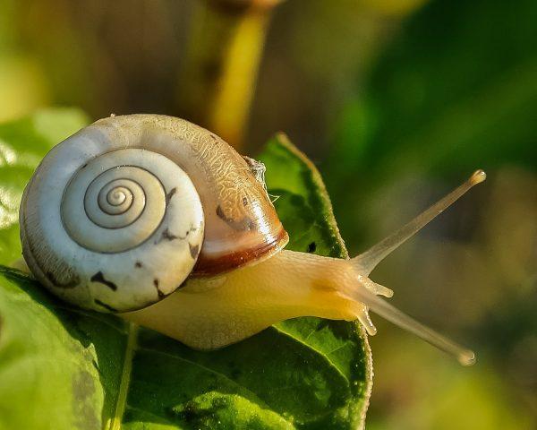 snail-405384_1920