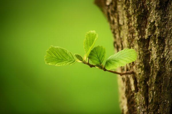trees-2987303_1280