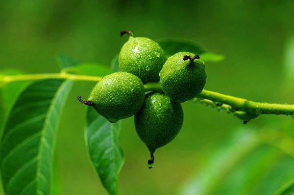 walnut-3471244_640