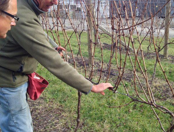 Spur-Pruning