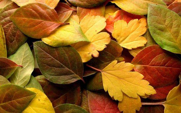 autumn-1332445_640