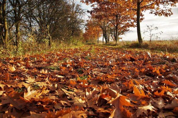 autumn-2882733_640