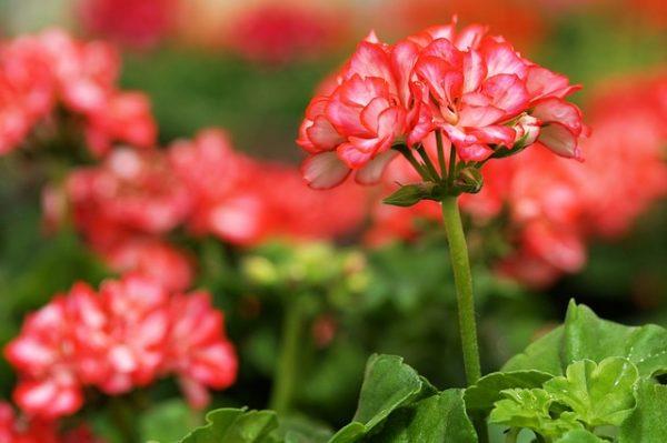 flower-2370672_640