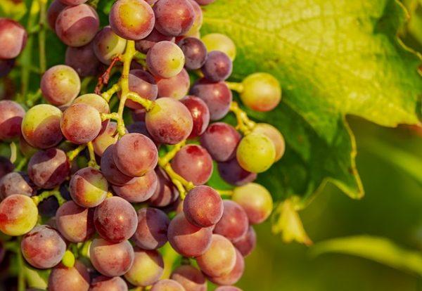 grapes-3555214_640-1