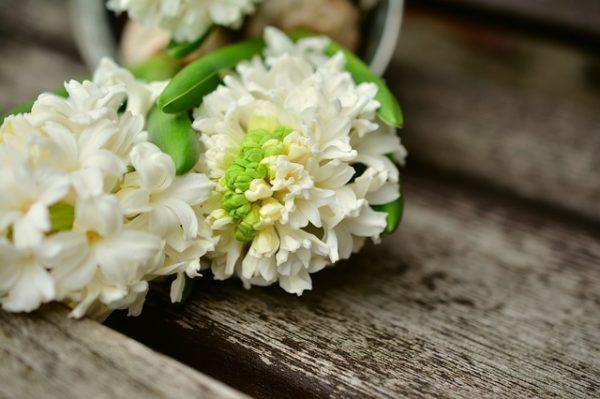 hyacinth-2105365_640