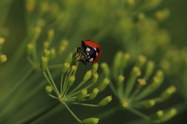 ladybug-3575868_640