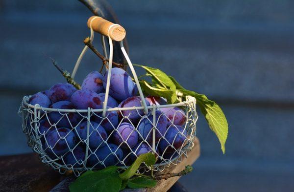 plums-1649316_640