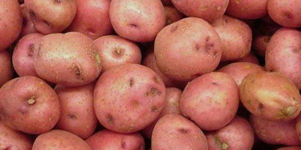 sorta-kartofelya