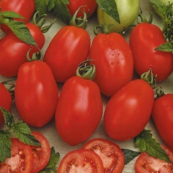 sorta_pomidor3