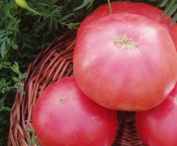 sorta_pomidor4
