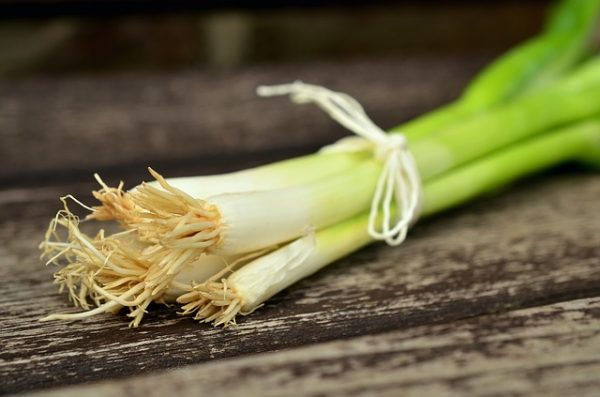 spring-onions-845032_640