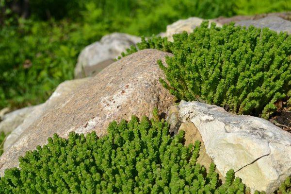 stones-1700060_640